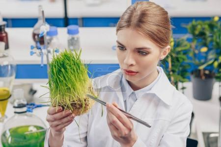 beautiful biologist with grass