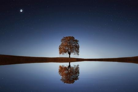 Tree near lake at night